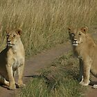Two young lions by sharkyvin