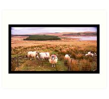 Ram of Donegal Art Print