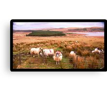 Ram of Donegal Canvas Print