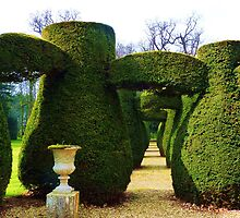 Topiary 2 by artfulvistas
