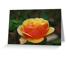 Textured rose Greeting Card