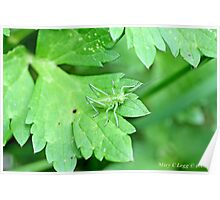 Grasshopper green on green leaf Poster