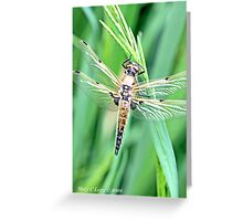 Newly emerged  Four-Spotted Chaser libellula quadrimaculata Greeting Card