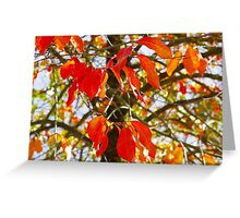 Burns Bog, Delta BC Greeting Card