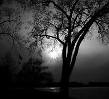 Night Moon by shutterbugg73