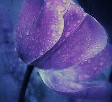 purple rain by JOSEPHMAZZUCCO