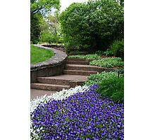 Up The Floral Walkway Photographic Print