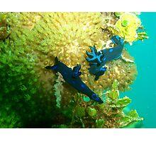 Nudibranchs on Coral Photographic Print