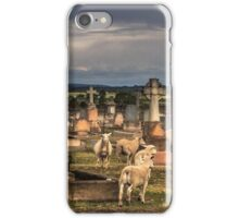 Sheep in the Cemetery - Clifton Qld Australia iPhone Case/Skin