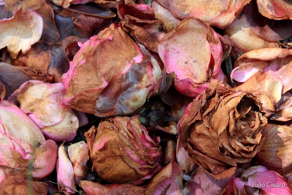 Petals & buds 7160 by João Castro