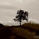 Lonely tree by Jenny Wood