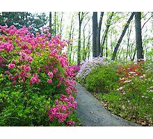Azalea Walk Photographic Print