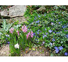 Spring Nook Photographic Print