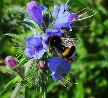 Bee blues by Bluesrose