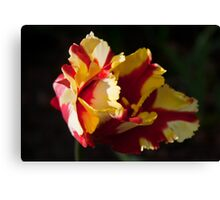 Fiery Flirt Canvas Print