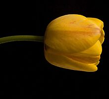 Dressed in Yellow by cherylc1