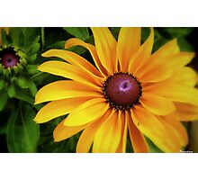 A Ray Of Sunshine Photographic Print