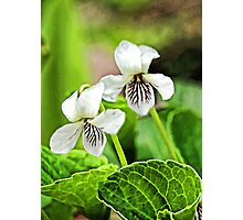 Two Wildflowers - Bridgton,  Maine Photographic Print