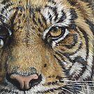 Tiger #13 by artbyakiko