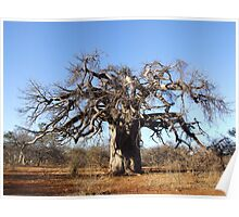 Baobab Winter Poster
