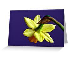 Daffodil flower Greeting Card