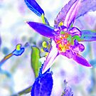 Star Flower Abstracted by Dana Roper