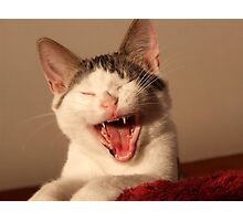 Max As Devil-Cat! Photographic Print