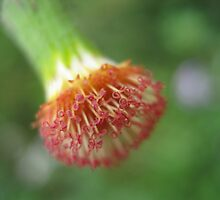 Macro Curls In The Garden by Vanessa Barklay