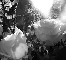 Roses in Black and White by ShanaLynn
