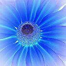 ~blue petals~ by Terri~Lynn Bealle