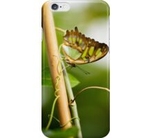 Malachite butterfly iPhone Case/Skin