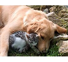 Best friend, cat and dog. Photographic Print