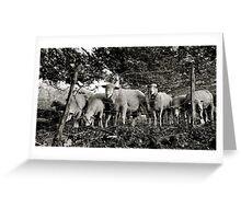 Sheep, Alpe Sassi, Switzerland Greeting Card