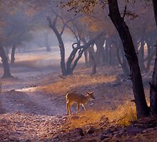 Alone by indianbsakthi