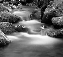 Cement Creek by Christine  Wilson Photography