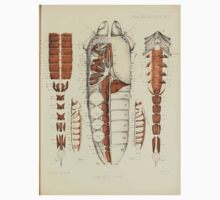On the Muscular and Endoskeletal Systems of Limulus and Scorpio Sir Edwin Ray Lankester 1883 0060 Anatomy Scorpion One Piece - Short Sleeve