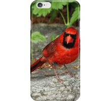 The Cardinal Stare iPhone Case/Skin