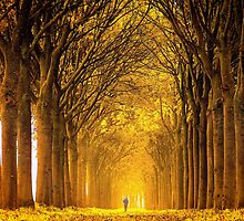 Running in Gold by LarsvandeGoor