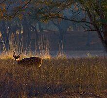 Wild Life by indianbsakthi