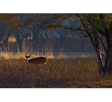 Wild Life Photographic Print