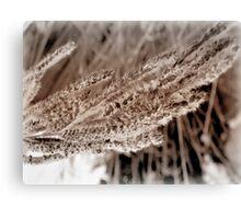 seed fur Canvas Print