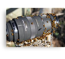 They love a Sigma lens...... Canvas Print