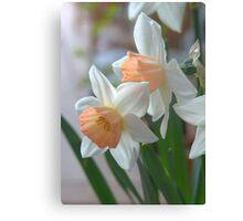 Delicate Daffodils  Canvas Print