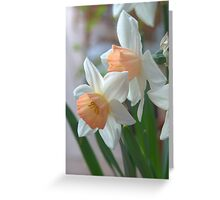 Delicate Daffodils  Greeting Card