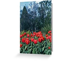 Spring Tulips—Kodachrome 64 Greeting Card