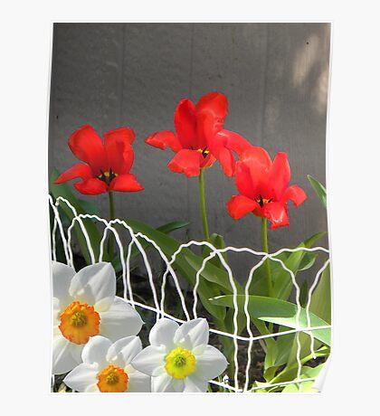 Garden Gifts Poster