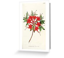 The Botanical magazine, or, Flower garden displayed by William Curtis V5 v6 1792 1793 0074 Azalea Nudiflora Coccinea, Scarlet Azalea Greeting Card