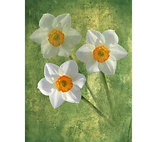 Three For Spring Photographic Print
