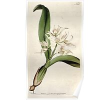 The Botanical magazine, or, Flower garden displayed by William Curtis V5 v6 1792 1793 0017 Epidendrum Cochleatum, Two Leaved Epidendrum Poster