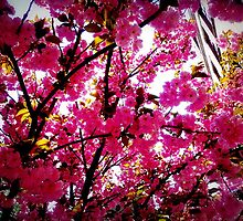 Lost in the Spring air & pink blossoms  by ShellyKay